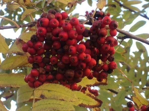 осень природа фото