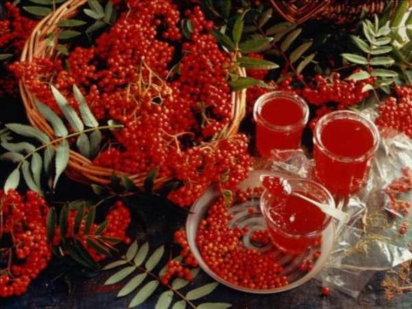 рябина красная заготовки на зиму