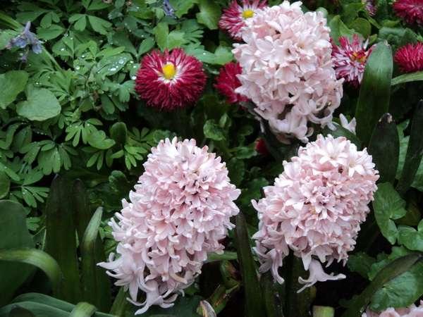 весенний фестиваль цветов