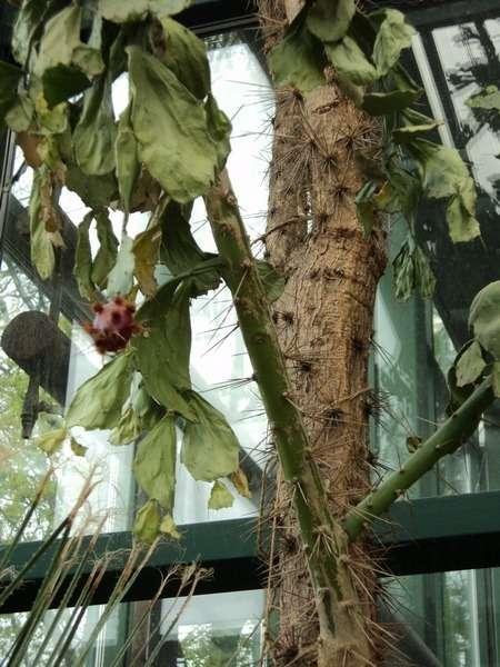 оранжерея в ботаническом саду