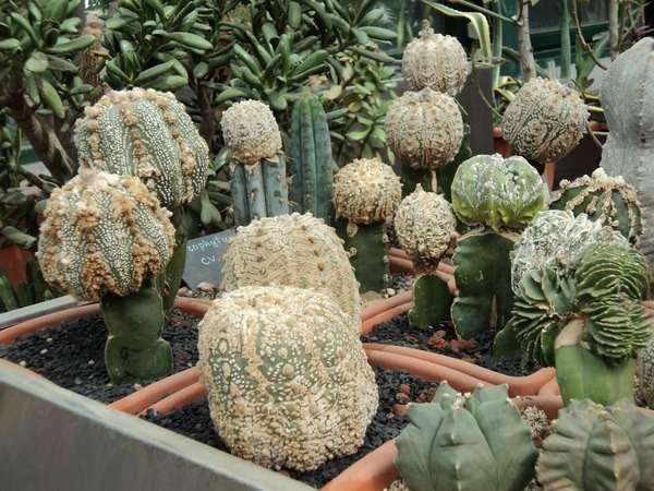 оранжерея москва ботанический сад