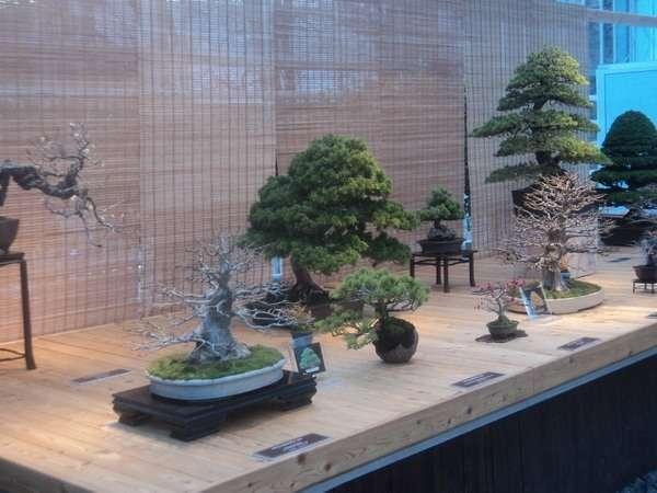 аптекарский огород выставка бонсай