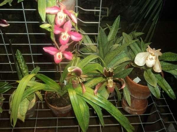 орхидеи на выставке
