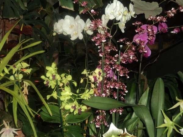 выставка орхидей в москве 2016 аптекарский огород