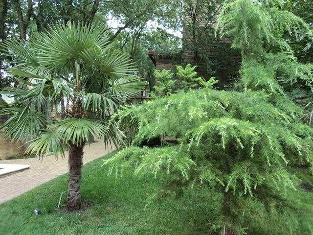 кабардинка старый парк фото