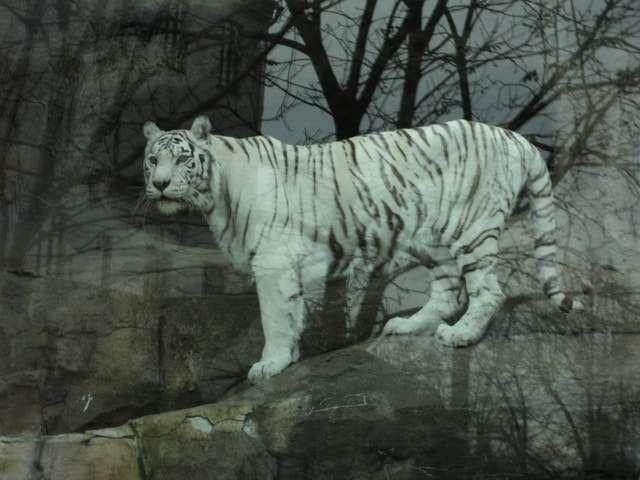 зоопарк в москве на баррикадной фото