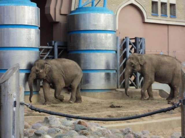 московский зоопарк цены на билеты 2016