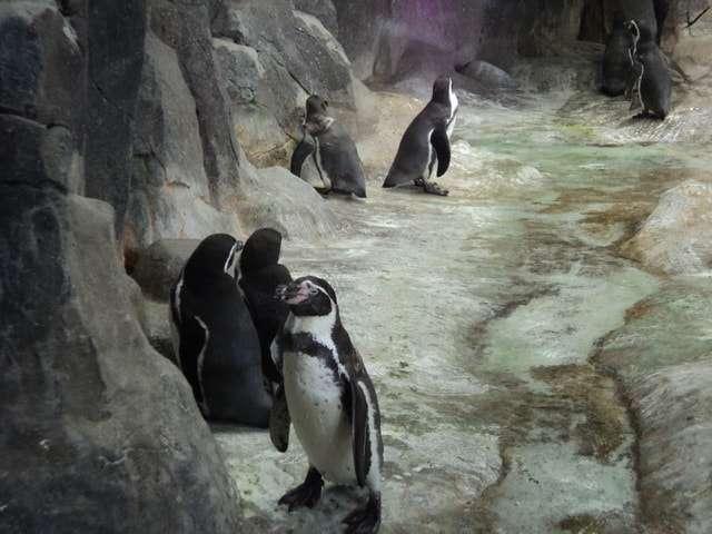 московский зоопарк адрес
