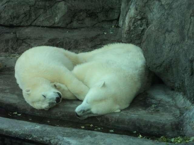 московский зоопарк фото