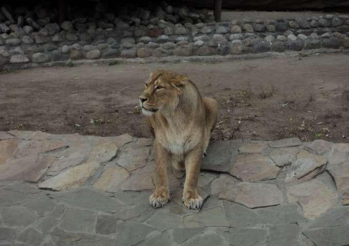 большой московский зоопарк фото