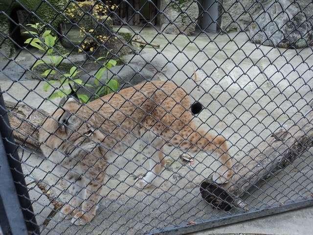 зоопарк в москве цены 2016