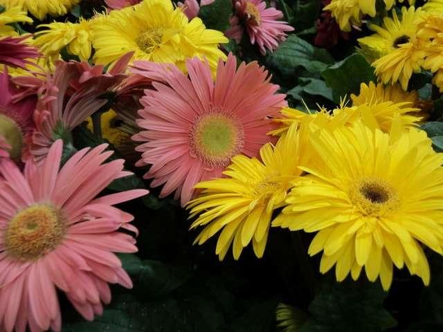 виды комнатных цветов