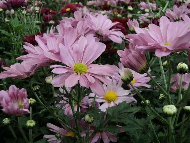 цветущие комнатные цветы фото и названия