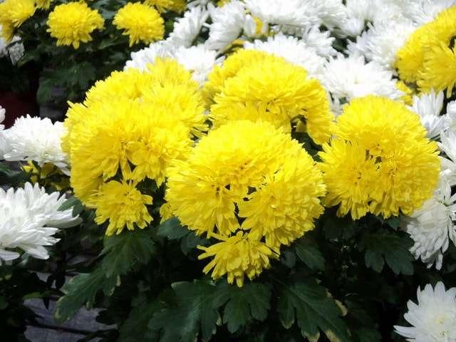 цветущие комнатные цветы фото с названиями