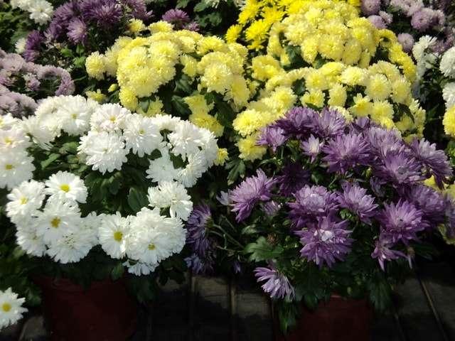 фото с названиями комнатные цветы цветущие