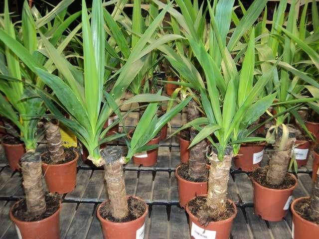 домашние растения фото