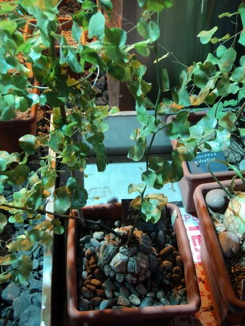 растения ботанического сада фото