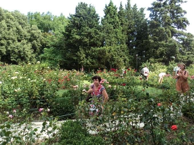 никитский ботанический сад в крыму фото