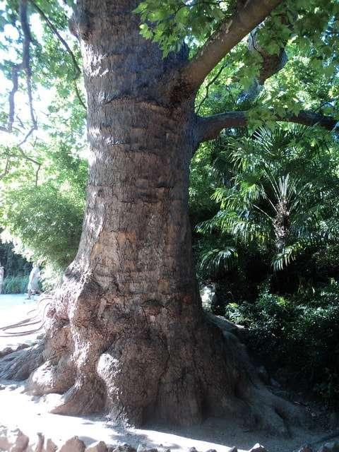никитский ботанический сад в крыму где находится