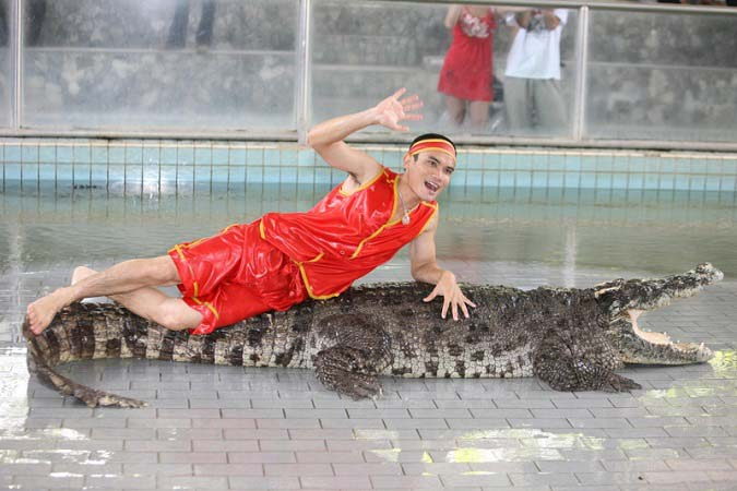 шоу крокодилы