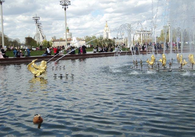 плавают утки