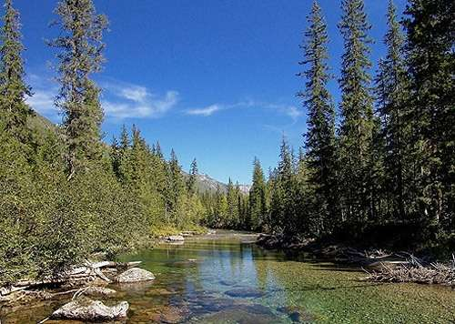 животный мир озера байкал