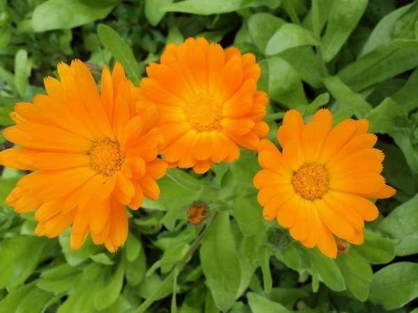 оранжевые солнышки