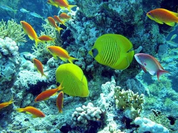 подводный мир красного моря видео