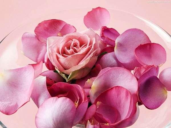 лепестки розы для розового масла