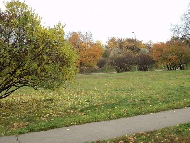 осень парк