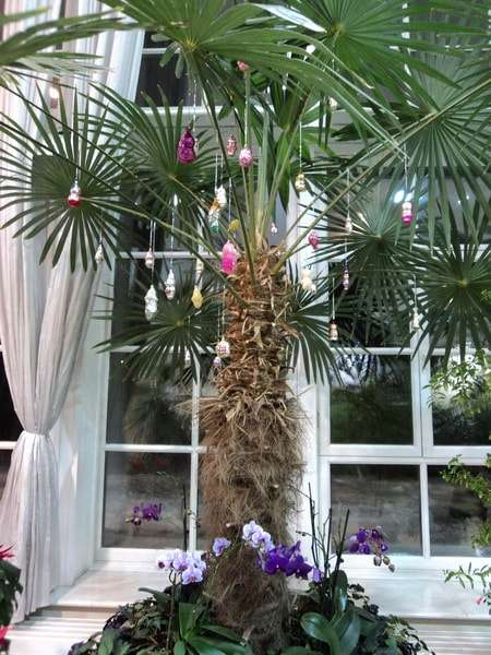 оранжереи в царицыно