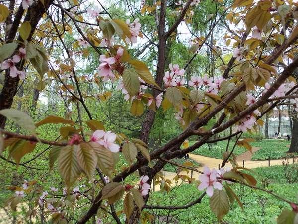весна цветущие деревья