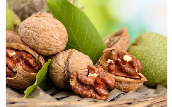 перегородки грецких орехов лечебные свойства