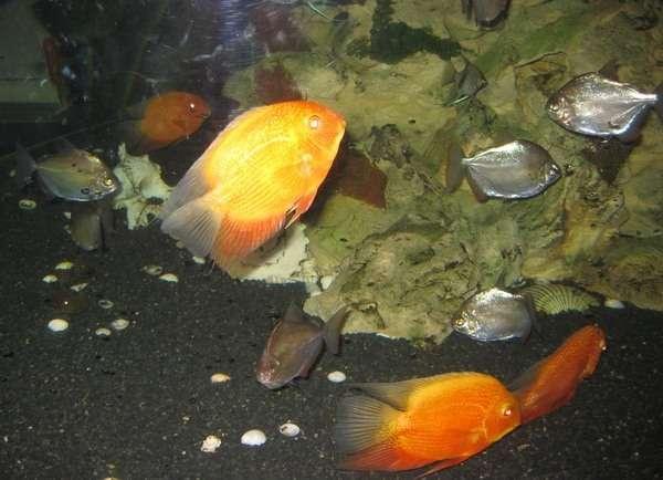 океанариум анапа фото