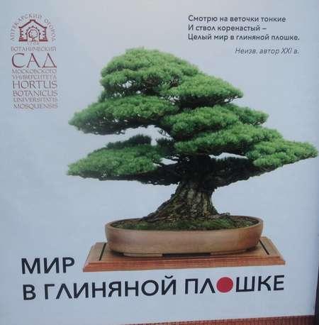 выставка бонсай в москве аптекарский огород