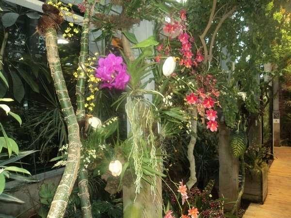 аптекарский огород ботанический сад