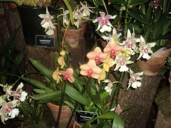 выставка орхидей в москве