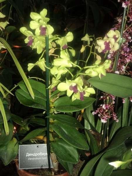 выставка орхидей в москве 2016