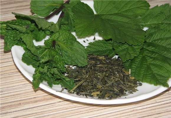 свежие и сухие листья растения