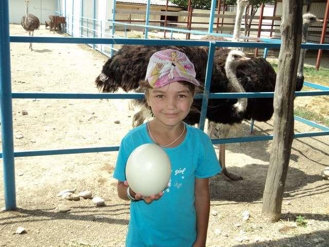 страусиная ферма фото