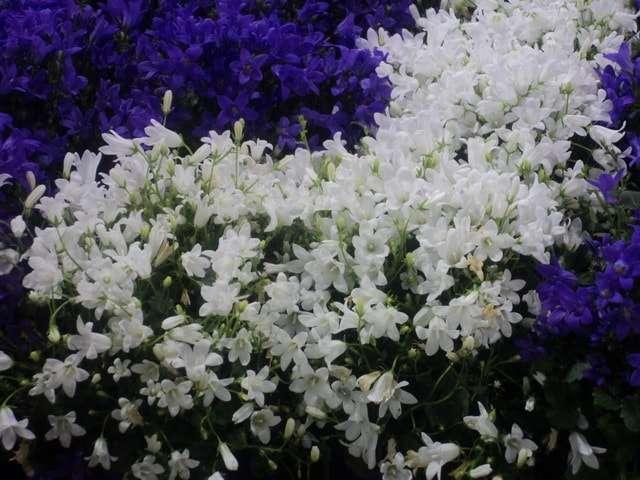 цветущие комнатные растения фото с названиями