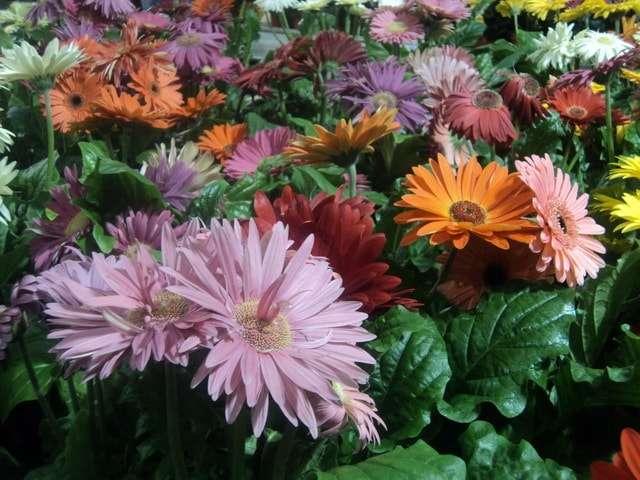 фото и названия комнатные цветы цветущие