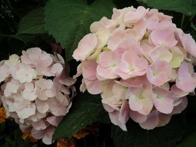 домашние цветы названия