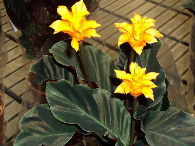 виды домашних цветов