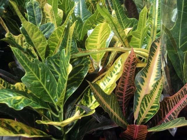 виды домашних растений