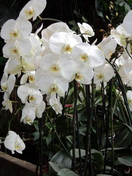 комнатные цветы виды