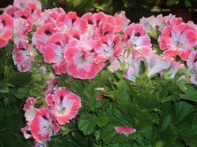 домашние цветы фото с названиями
