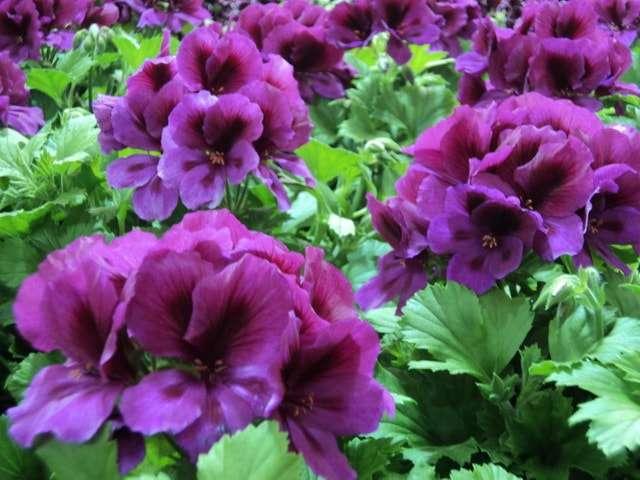 домашние растения названия