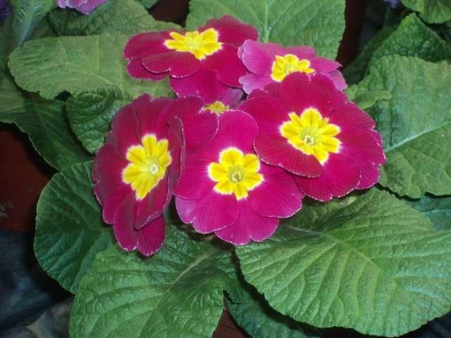 цветущие комнатные растения фото и названия