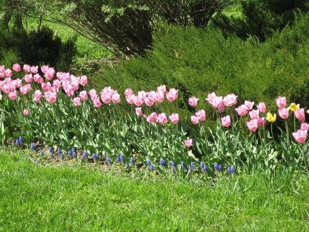 шамордино фото весной